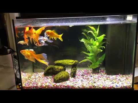 My Jewel Accord 70 Cold water tank
