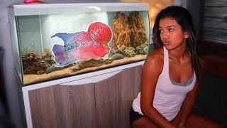 my-flowerhorn-fish-gets-insane-tank-world-s-smartest-fish