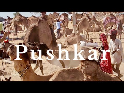 PUSHKAR CAMEL FAIR   PUSHKAR, INDIA   Travel पुष्कर