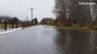 Salmon return across flooded road in Washington State, USA