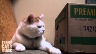 Два кота - Одна коробка / Two Cats - One Box
