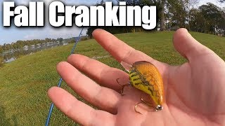 Fall Bass Fishing with a Crankbait - More $15 Baitcaster Action