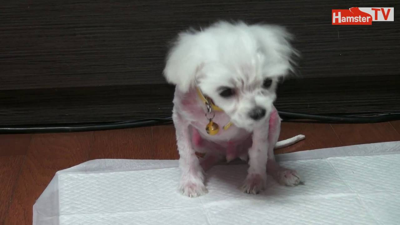 how to train a maltese puppy to stop biting