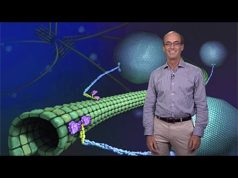 Ron Vale (UCSF, HHMI) 1: Molecular Motor Proteins