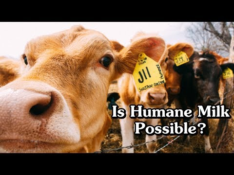 Ethical Milk: Is it possible and what would it cost?