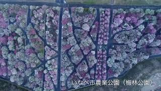 【ドローン撮影】いなべ市農...