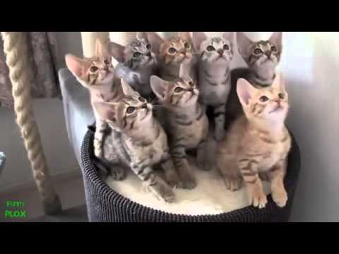 best funny animal videos compilation 2013 new hd   youtube