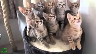 best funny animal videos compilation 2013 new hd