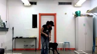 Video Submission: Academy For Dog Trainers Scholarship Application