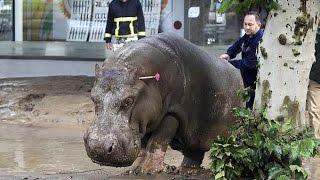МОЛНИЯ! Наводнение в Грузии! Из зоопарка Тбилиси вырвались животные! Новости, сегодня, 2015 mp4(СМОТРЕТЬ ОБЯЗАТЕЛЬНО ВСЕМ!!! ЭТО НИКОГО НЕ ОСТАВИТ РАВНОДУШНЫМ!!! Путин,Украина,Россия,обама,сша,киев,хунта,..., 2015-06-14T17:54:08.000Z)
