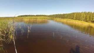 рыбалка ультралайт Озеро Пионерское в Выборгском районе Лен. обл..