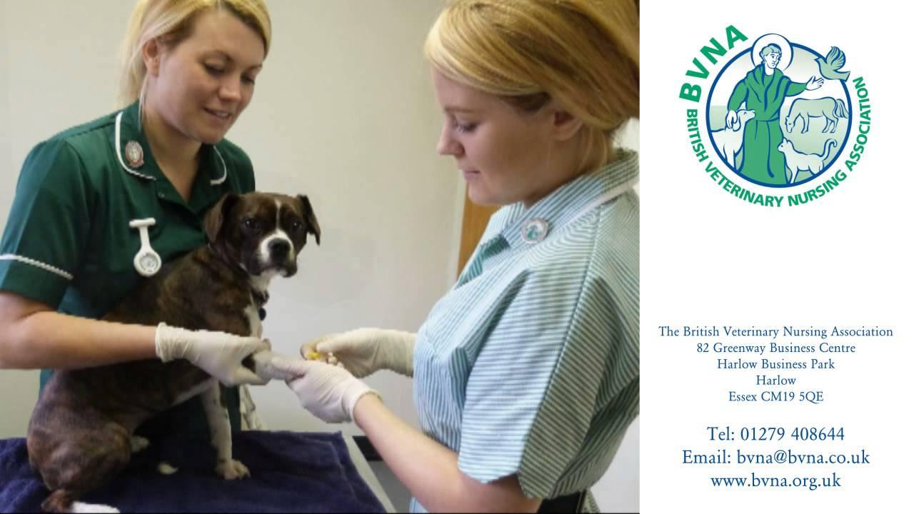 A Career In Veterinary Nursing Youtube