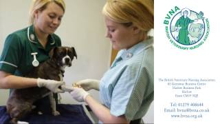 A Career in Veterinary Nursing