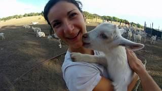 Episode bonus : Ben & Mélie dans une ferme australienne