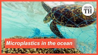 All about microplastics