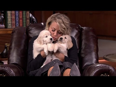 Kaley CuocoSweeting Gets Covered in Puppies, Nearly 'Dies' From Excitement