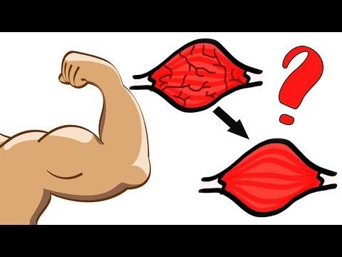 Сколько растут мышцы. Научные данные и практика.