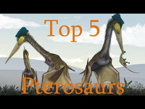 Top 5 Pterosaurs