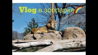 VLOG №15 в зоопарк с немецким другом