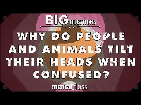 Why do people and animals tilt their heads when confused? - Big Questions - (Ep. 43)