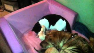 Amazing cat and dog in labor same time... MUST SEE