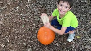 RSM and Kids Break Fresh Pumpkins for Our Backyard Chickens