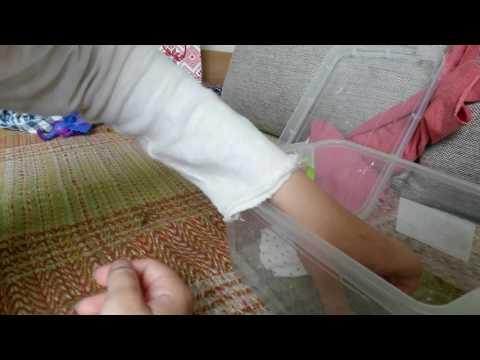 Дом для гигантского комара долгоножки