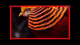 The most exotic animals in the world