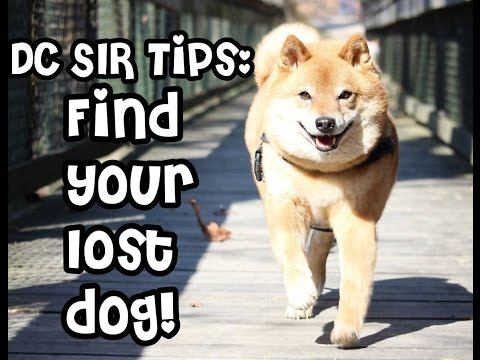 DC SIR: Tips For Finding Your Lost Dog