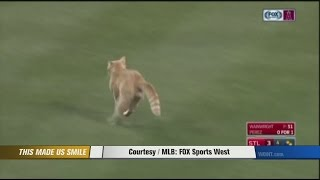 Rally cat takes the field