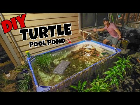 Upgrading My Backyard TURTLE Pool Pond!!!