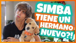 Mix - Daniel El Travieso - Hay Una Nueva Mascota En Casa.