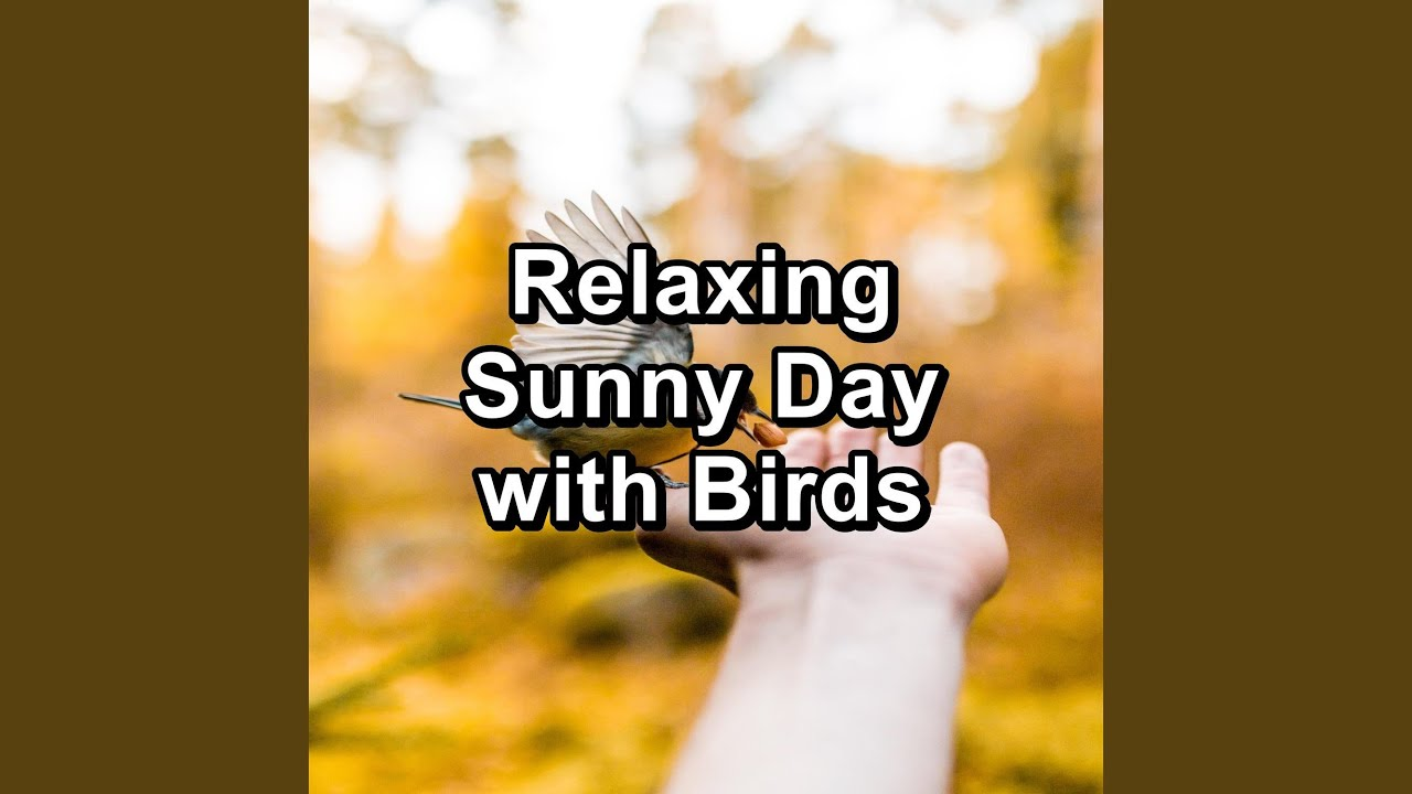 Music from Birds For Studying To Help with Relaxing