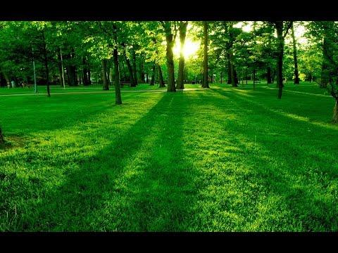 Escuchar Corán para Relajarse | Dormir Profundamente | Combatir el estrés | Meditación...