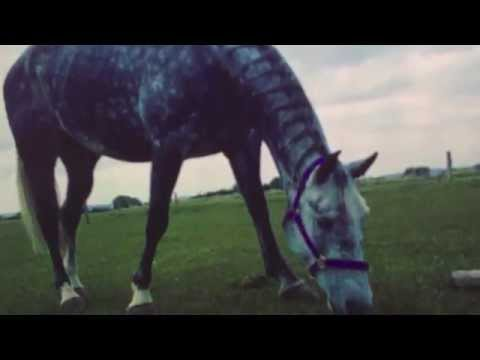 I'm Only One Call Away. {NEW HORSE!!}