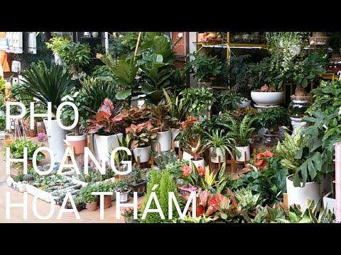 Phố Hoàng Hoa Thám –  phố bán cây cảnh lớn nhất Hà Nội🌳 | bonsai market in Vietnam