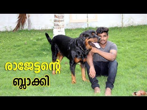 Rottweiler dog I രാജേട്ടൻറെ  ബ്ലാക്കി I dog farming kerala