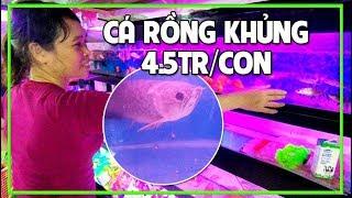 TIỆM CÁ CẢNH SÀI GÒN - Mua Cá Lẻ với Giá Sỉ các loại Cá Kiểng Rẻ và Đẹp nhất