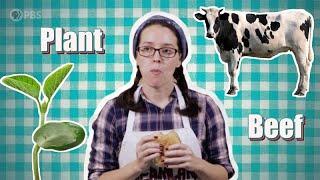 Burger Brawl: Plant Protein Vs. Beef Burger