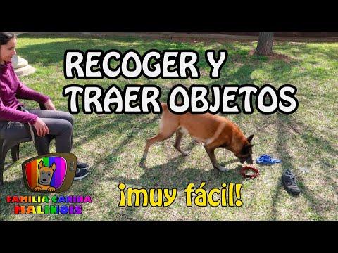 ENSEÑAR a un perro a RECOGER/TRAER OBJETOS | Adiestramiento de perros
