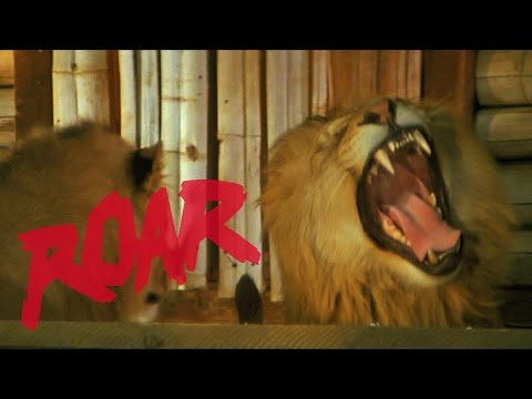 Roar review: big cat movie that injured 70 crew is re-released! Run