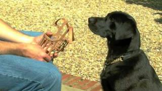 Dog Muzzle Training  - How To Muzzle A Dog