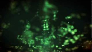 deadmau5 meowingtons hax tour visuals behind the scenes