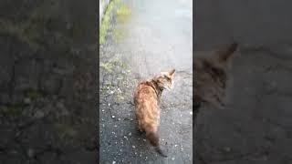 нашли кошку