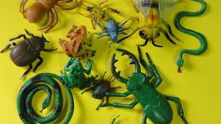 small colored plastics insect toy juguete pequeño insecto plásticos de colores