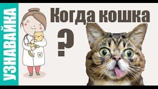 Когда кошка хочет кота, родит и гуляет? Узнавайка