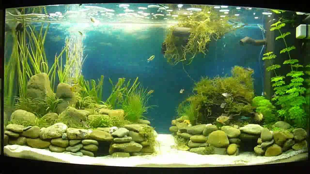 planted juwel vision 180 aquarium aquascape complete. Black Bedroom Furniture Sets. Home Design Ideas