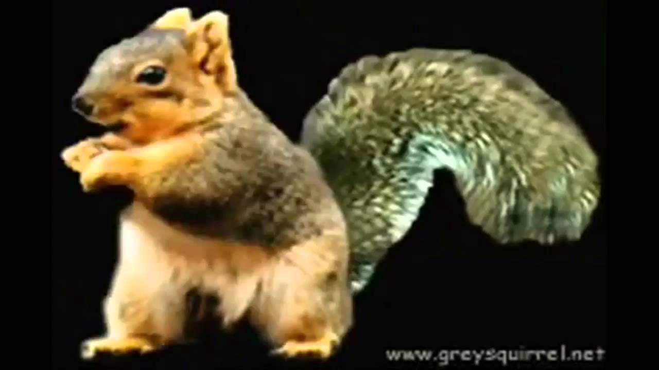 alxemy how to make a squirrle