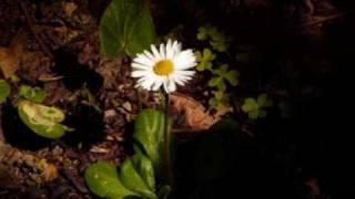 Çocuk Şarkıları - Sevgi Çiçekleri