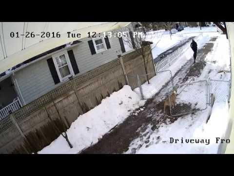 Fedex dog food delivery